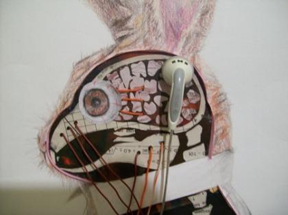 Anatomia de Um Coelho (detalhe)