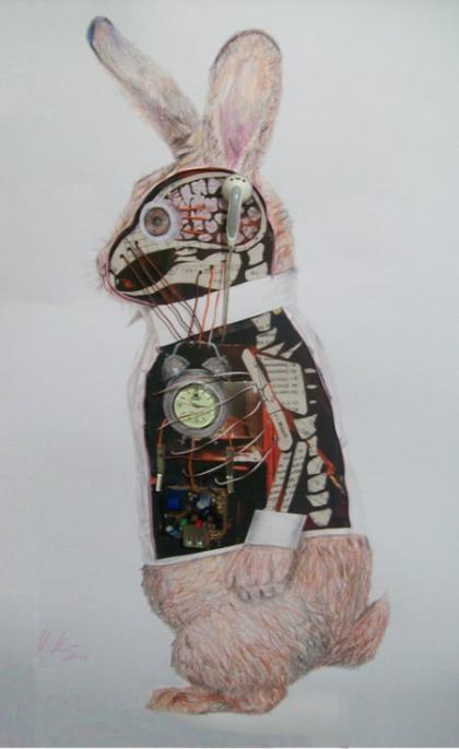 Anatomia de Um Coelho